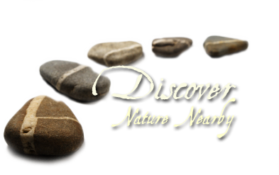 Discover Nature Nearby
